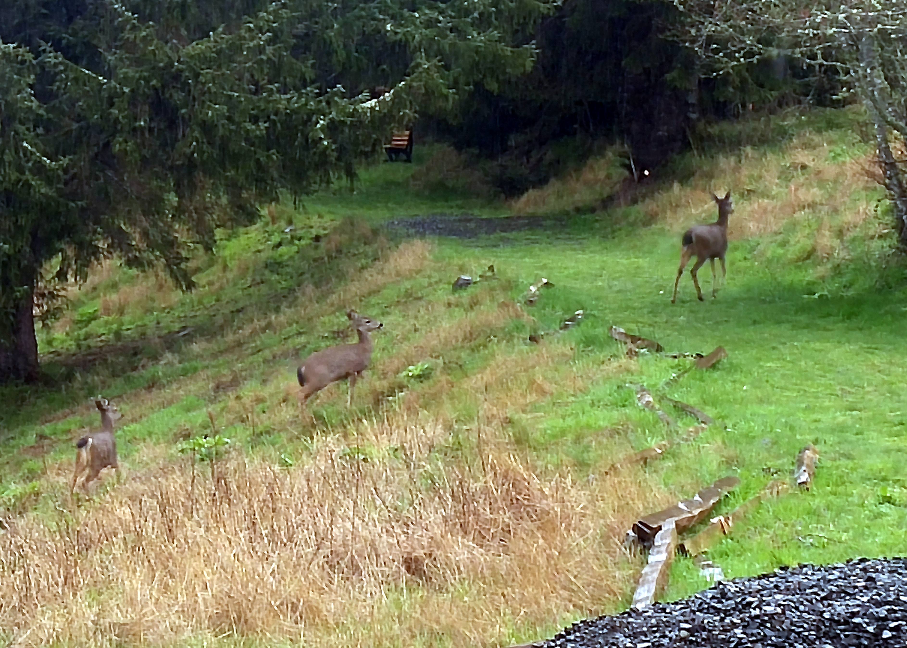 Deer on the two rivers trail