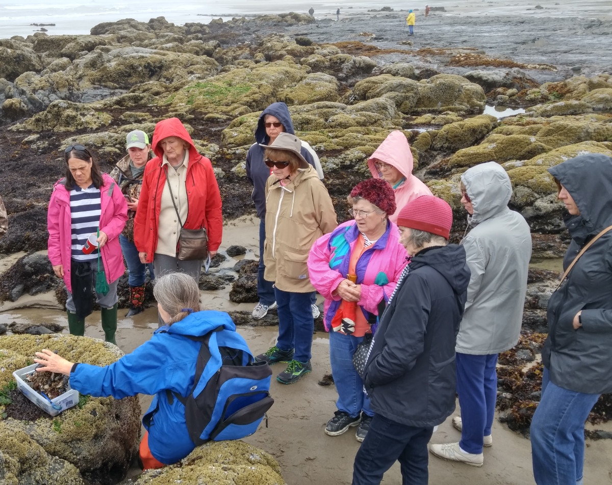 Lincoln City tidepool clinic